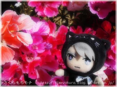 11nekogaku_top.jpg